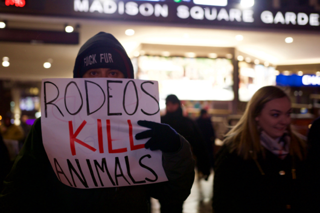rodeos kill animals